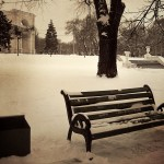 A Bench in Central Park.