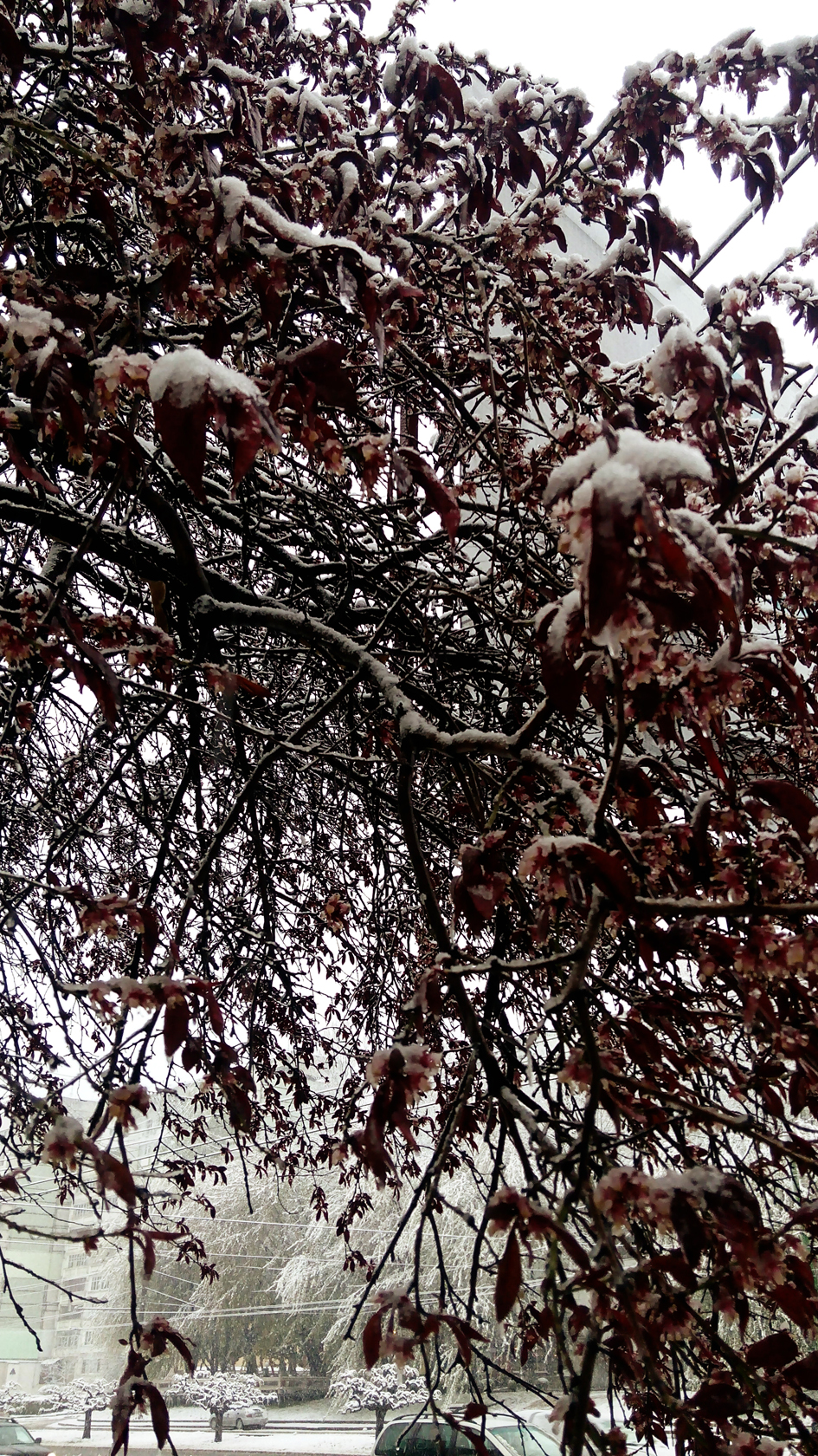 april snow in chisinau (7)